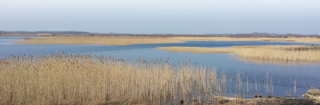 Balycon wetland (rehabilitated in 2006).